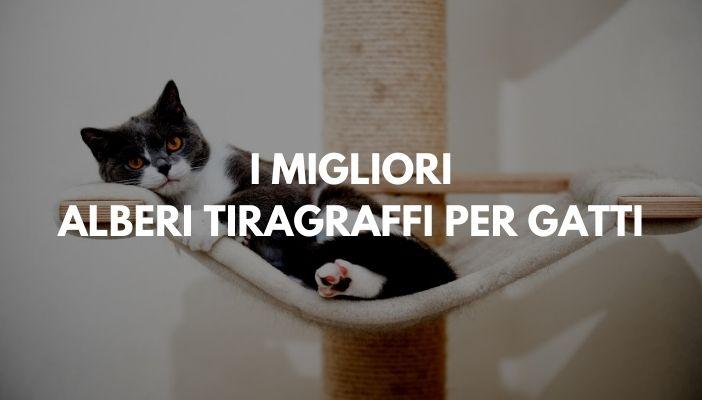 I MIGLIORI ALBERI TIRAGRAFFI PER GATTI